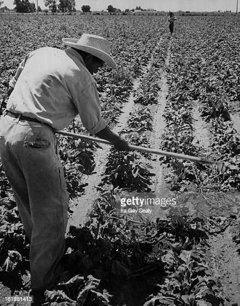 Migrant Labor - Colo.;