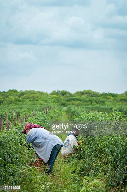 migrant labor - migrant worker stock photos and pictures