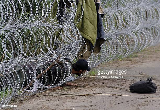 A migrant man creeps under the metal fence near the village of Roszke at the HungarianSerbian border on August 26 2015 More than 140000 migrants have...