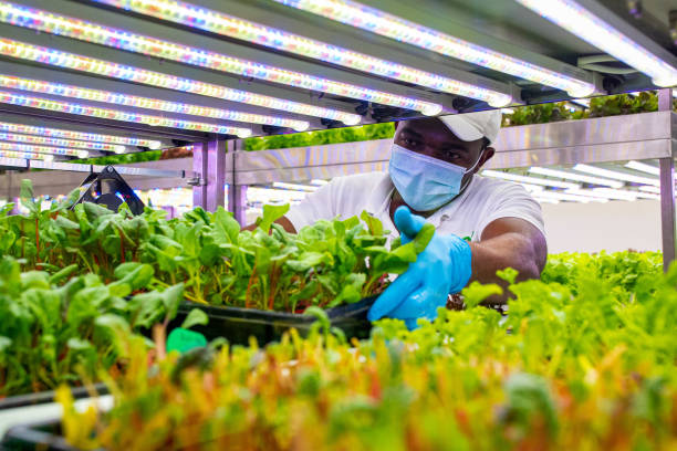 ARE: Indoor Farming's Success Depends on the Cheapest Lightbulb