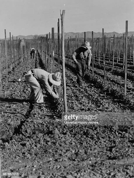 Migrant workers during the great depression by Dorothea Lange 18951965 dated 19350101