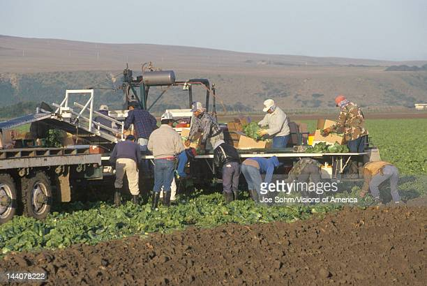 Migrant workers harvest crops in Central Valley CA