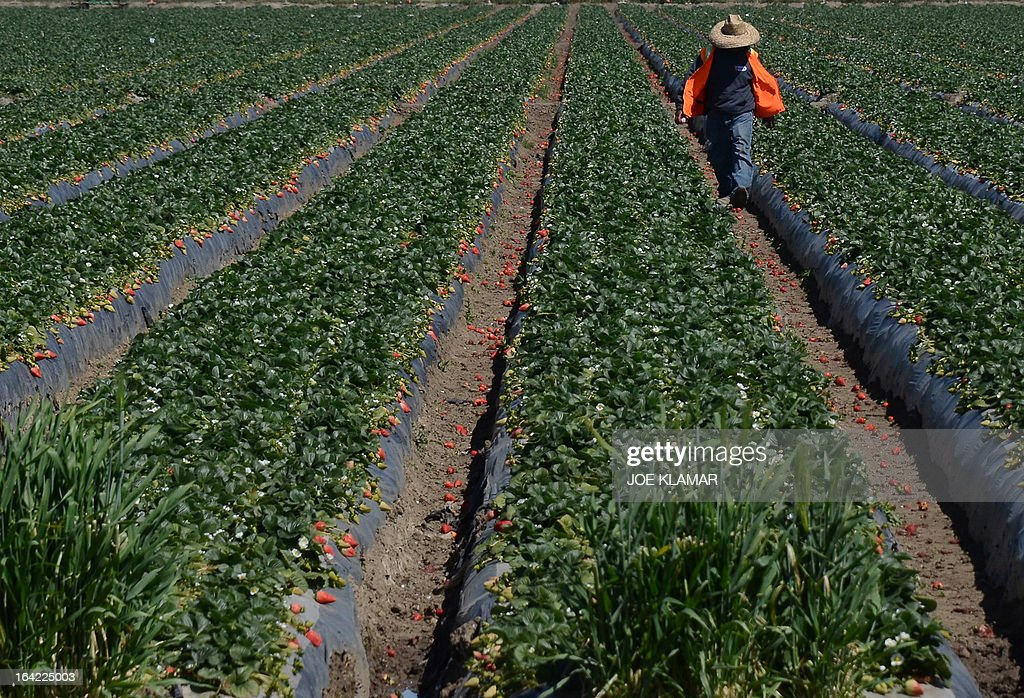US-IMMIGRATION-FARMWORKERS : News Photo