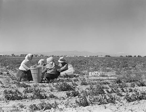 Migrant Workers having Lunch in Pea Field Migrant Camp in Background near Calipatria California USA Dorothea Lange for Farm Security Administration...