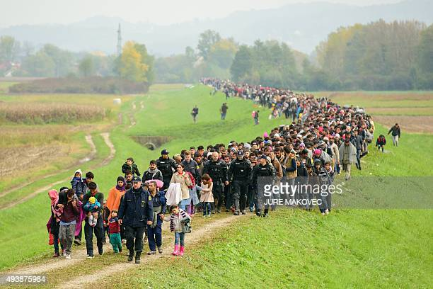 Migrants and refugees walk toward a refugee center after crossing the CroatianSlovenian border near Brezice on October 23 2015 More than 12600...
