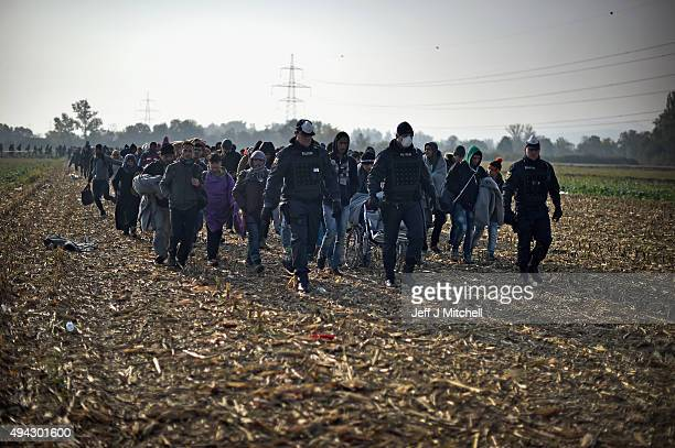 Migrants are escorted by police through fields towards buses which will take them to Brezice refugee camp on October 26 2015 in Rigonce Slovenia...