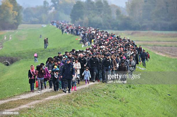 Migrants are escorted through fields by police as they are walked from the village of Rigonce to Brezice refugee camp on October 23 2015 in Rigonce...