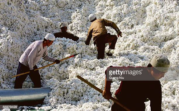 Migrants work at a cotton factory on October 15, 2005 in Shihezi city of Xinjiang province, China. Attracted by the prospect of earning more, rural...
