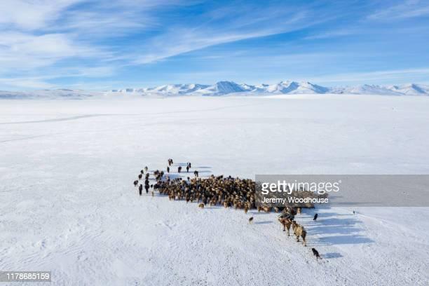 migrating herd - un animal fotografías e imágenes de stock