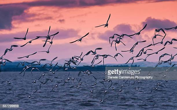 migrating - animal migration stock pictures, royalty-free photos & images