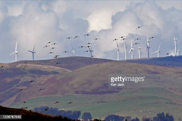 Migrating pink-footed geese at the RSPB's Loch Leven nature reserve silhouetted against wind turbines on the hills behind, on September 29, 2020 in...