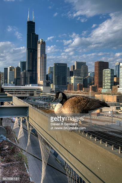migration break with a view - metra train stock photos and pictures