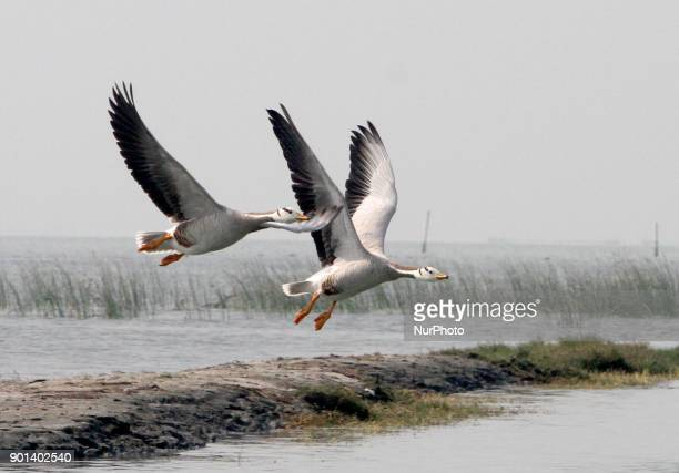 Migratory birds are seen at the Nalabana bird sanctuary inside the Chilika Lagoon above 100 km away from the eastern Indian state Odisha's capital...