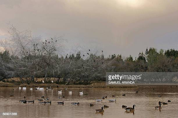 Migratory birds cruise in the natural park of La canyada de los pajaros near the spanish natural park of Donana 21 February 2006 in southern Spain...