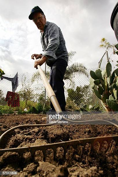 Miguel de la Torre tends his plot at the South Central Community Farm on March 9 2006 in Los Angeles California Owner and developer Ralph Horowitz...
