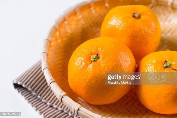 mikan, citrus unshiu - ミカン ストックフォトと画像
