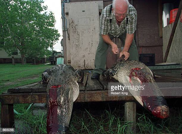 11 Dade City Alligator Processing Center Pictures, Photos