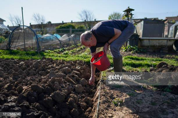 Mike Johnson plants potatoes as he tends to his allotment and follows government guidelines on social distancing and time restrictions on April 08,...