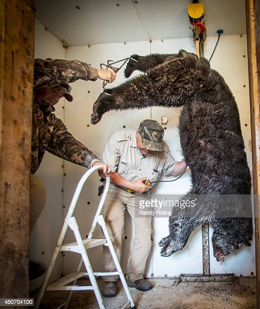 Mike Miller helps Glenn Rivard hang a black bear in Rivard's personal abattoir Rivard is President of the Ontario Federation of Anglers and Hunters...