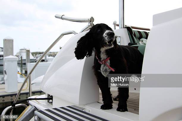 Mike Oldfield's dog on a yacht n the Bahamas on May 31 2009