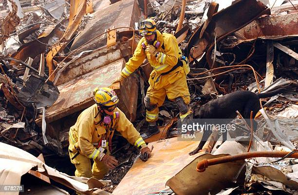 Mike Scott from the California Task Force8 and his dog Billy search through rubble for victims of the September 11 terrorist attack at the World...