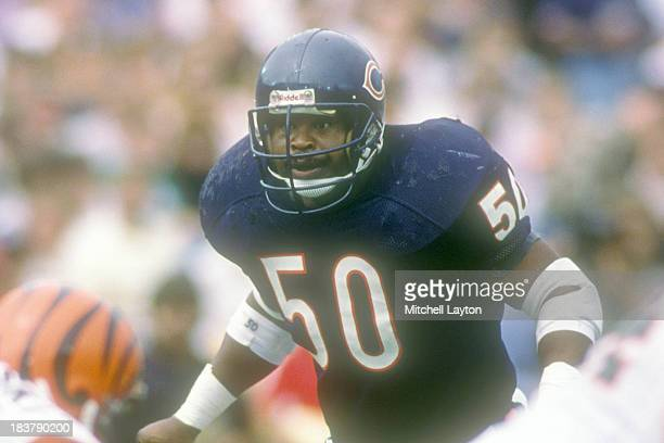 Mike Singletary of the Chicago Bears looks on during a football game against the Cincinnati Bengals on September 12 1989 at Soldier Field in Chicago...