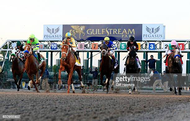 Mike Smith atop Arrogate and others break the gate to start the $12 Million Pegasus World Cup Invitational at Gulfstream Park on January 28 2017 in...