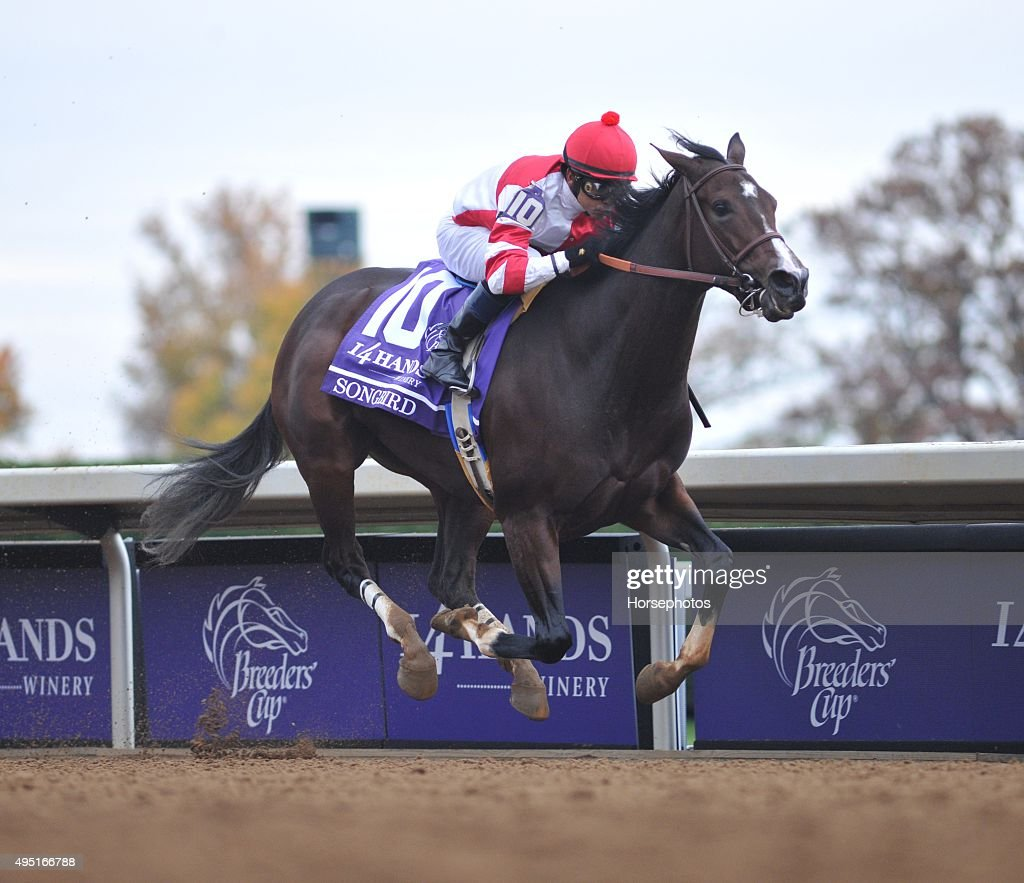Breeders' Cup - Day 2 : News Photo