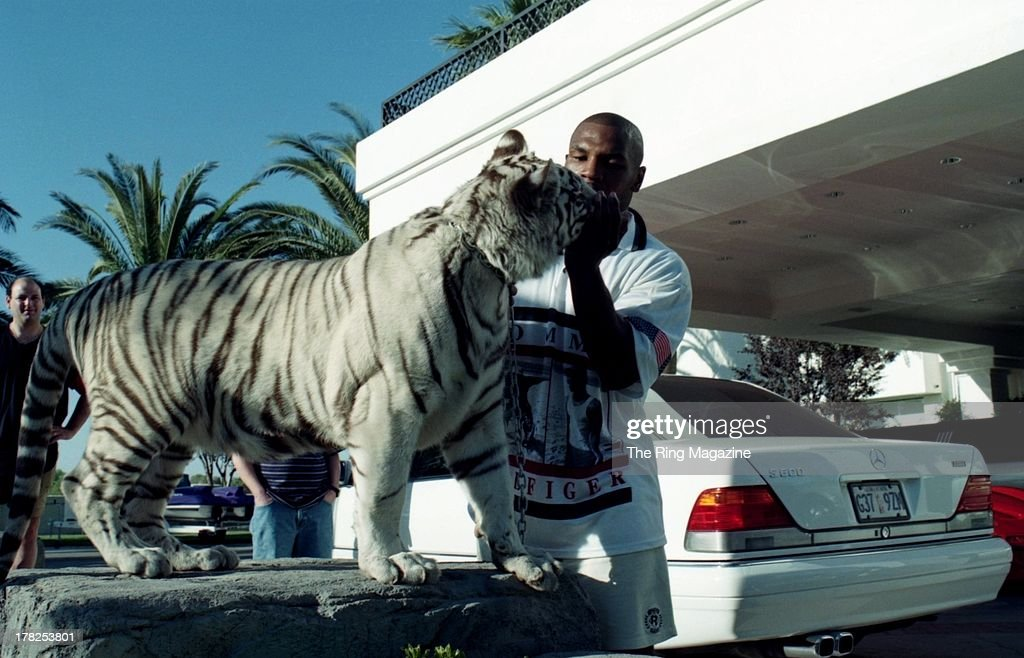 Mike Tyson poses with his white tiger during an interview at his home. The Ring Magazine/Getty Images)