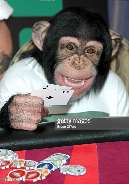 Mikey the poker playing chimp during PokerShare.com Sponsors Mikey the Chimp at the WSOP at Palms Casino Resort in Las Vegas, Nevada, United States.