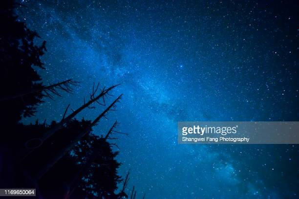 mikey way with trees silhouette in foreground - north star stock pictures, royalty-free photos & images