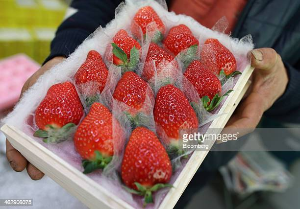 Mikio Okuda, owner of Okuda Farm, holds a box of Himebijin strawberries for a photograph at his farm in Hashima, Gifu Prefecture, Japan, on Tuesday,...
