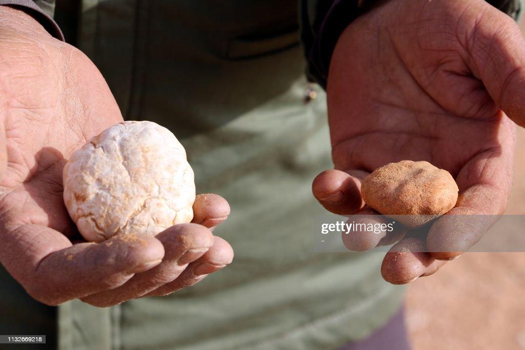 LBY: Desert truffles are Libya's 'manna from heaven'