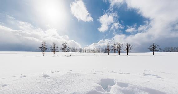 Mild Seven Hills in Winter, Biei-Cho, Hokkaido, Japan - gettyimageskorea