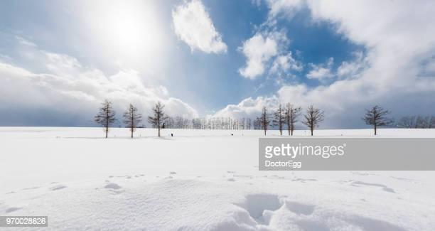 mild seven hills in winter, biei-cho, hokkaido, japan - 雪 ストックフォトと画像