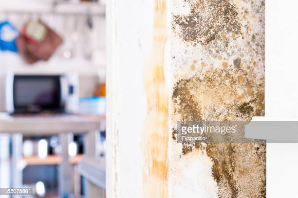 Mildew Mold Rotting Wall of Modern House behind Furniture
