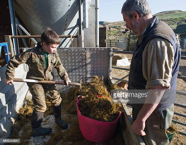 Miles Owen mucks out a railer as his father Clive looks on at Ravenseat, the farm of the Yorkshire Shepherdess Amanda Owen on April 15, 2014 near...