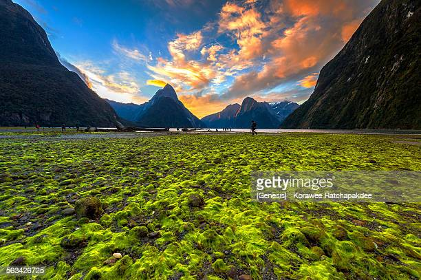 Milford sound with the sunset