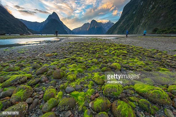 Milford Sound,South Island,New Zealand.