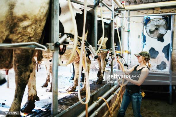 miliking the cows at dairy farm - agricultural occupation stock pictures, royalty-free photos & images