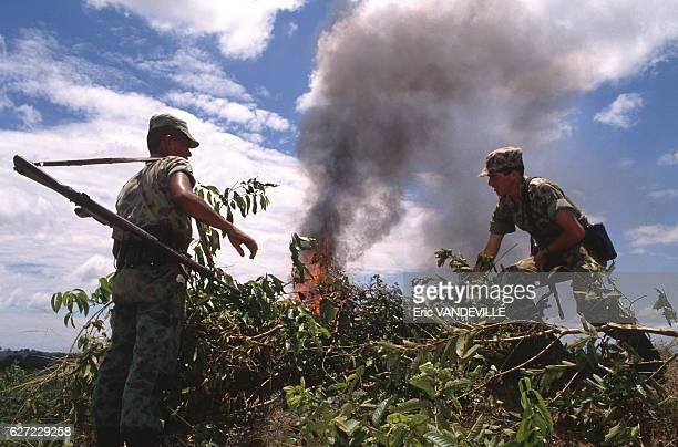 Militaires brûlant des feuilles de coca dans une propriété appartenant au narcotrafiquant Gonzalo Rodriguez Gacha surnommé 'Le Mexicain' l'un des...