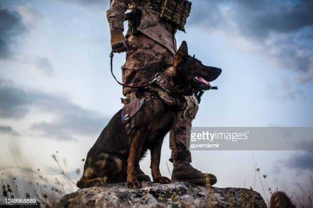 military guard dog and its soldier owner - police dog stock pictures, royalty-free photos & images