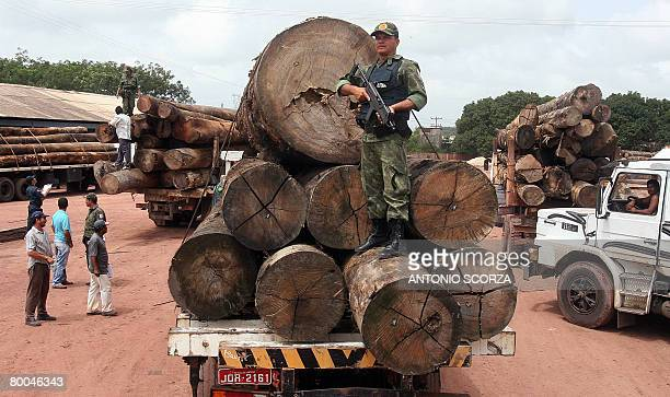 A Military Police agent guards a lorry loaded with confiscated wood in the clandestine sawmill TaiPlac during the Arch of Fire operation in Tailandia...