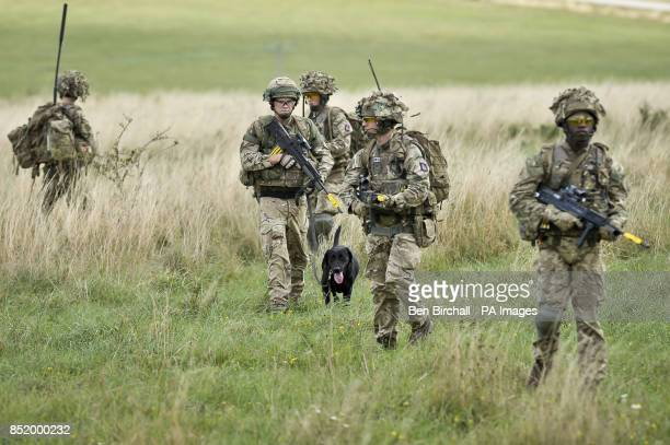 Military working dog Tonic the fiveyearold black Labrador joins his handler Private Mark Kilgour 1 Military Working Dogs from Livingston and his...