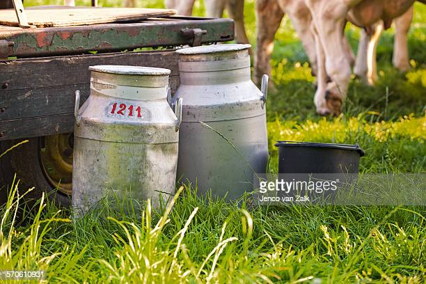 Milk churns in the meadow in Holland
