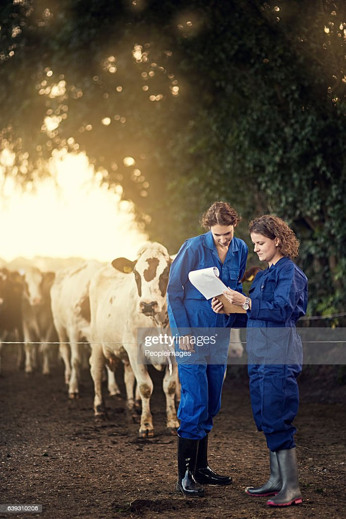 Milk production is rising steadily : Stock Photo