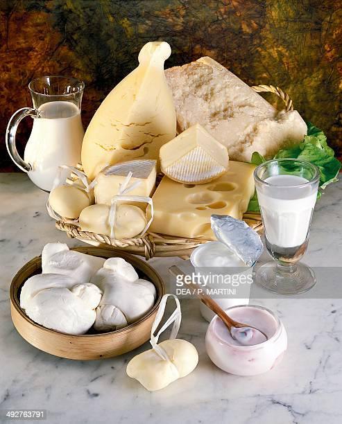 Milk selection of cheeses and yogurt