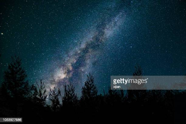 milk way at night in forest - night stock pictures, royalty-free photos & images