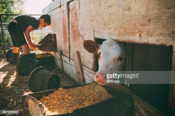 Milking Calves