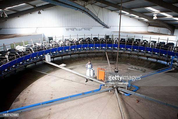 Milking machine in dairy farm